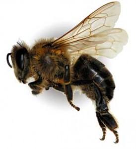 Пчеловодство как бизнес