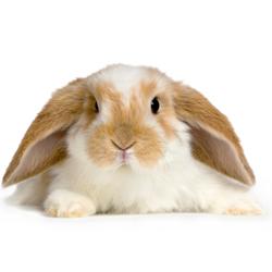 разведение кроликов бизнес