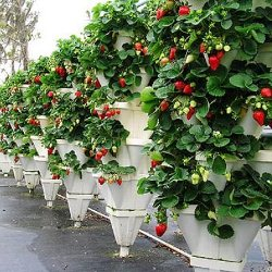 бизнес план по выращиванию клубники