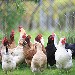 Бизнес-план птицеводства
