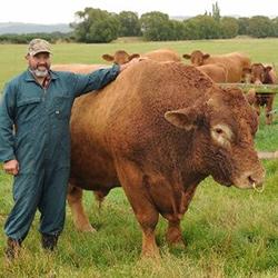 Разведение бычков как бизнес