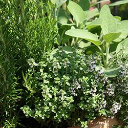 Выращивание лекарственных растений как бизнес