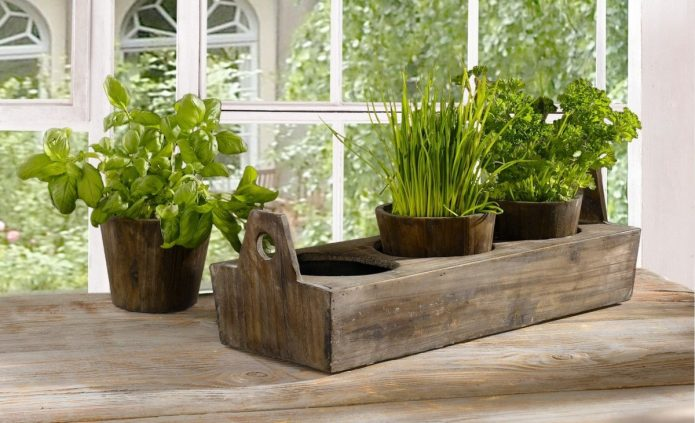 Выращивание зелени на подоконнике в квартире
