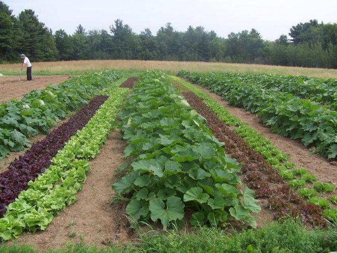 Сельскохозяйственные культуры