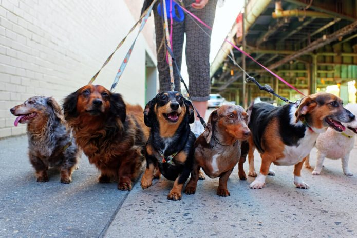 Прогулка с собаками