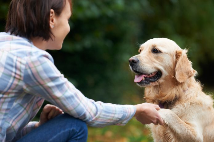Собака даёт лапу своей хозяйке