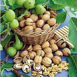 Грецкие орехи как бизнес