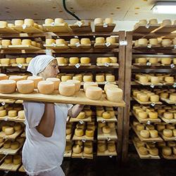 Изготовление сыра в домашних условиях как бизнес