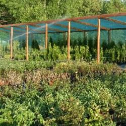 Как создать питомник растений