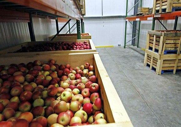 Яблоки в ящиках на складе