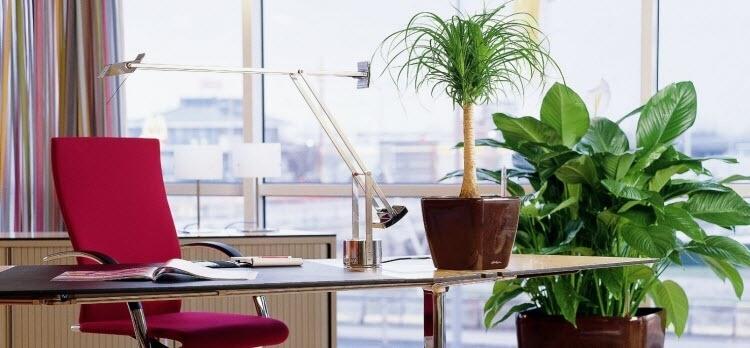 Какие цветы выбрать для офиса: самые удачные варианты на фото