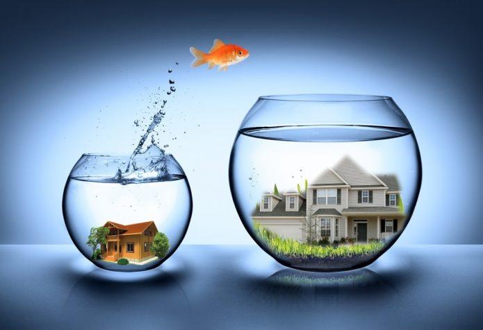 Рыбка прыгает из одного аквариума в другой