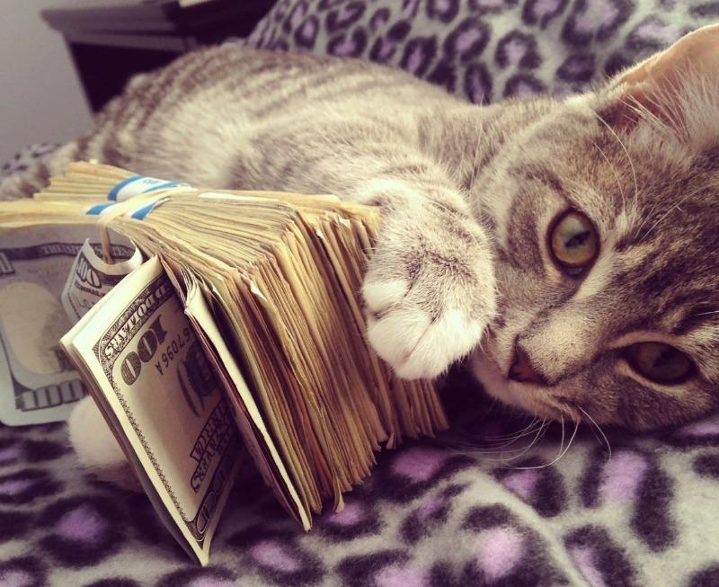 Народные приметы про котов и деньги